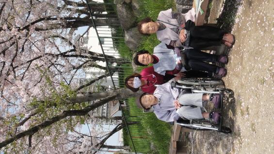 桜満開!!天王川公園